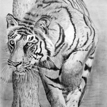 Tigress-Hunting-600-web