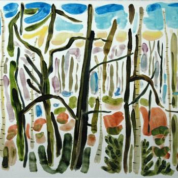 woods-7th-feb