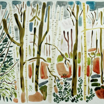 woods-in-febuary-8th-feb-ic