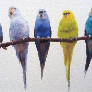 Budgies-on-perch-teresa-tanner-1000px