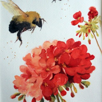bees-red-geraniums-main